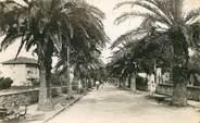 "83 Var CPSM FRANCE 83 ""Sanary, avenue de Port Issol"""