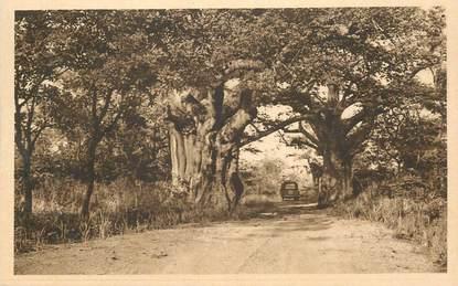 "CPA BÉNIN ""Nikki, Baobabs sur la route""/ N° 90"