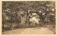 """Afrique CPA BÉNIN """"Nikki, Baobabs sur la route""""/ N° 90"""