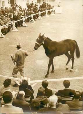 """PHOTO ORIGINALE / PHOTO DE PRESSE / SPORT """"Hippisme, Vente de Yearlings trotteurs à Vincennes, 1963"""""""