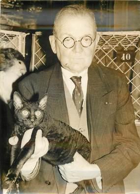 """PHOTO ORIGINALE DE PRESSE """"Exposition féline du Cat Club de France, ici le chat frisé"""""""