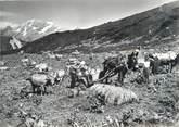 """73 Savoie CPSM FRANCE 73 """"Courchevel Moriond, la traite des vaches"""""""
