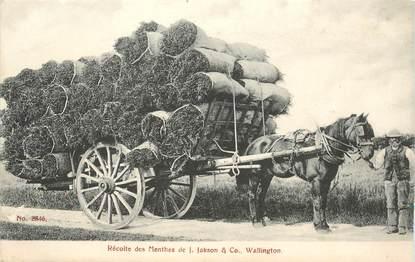 """CPA USA """"Wallington, Récolte de la menthe"""""""
