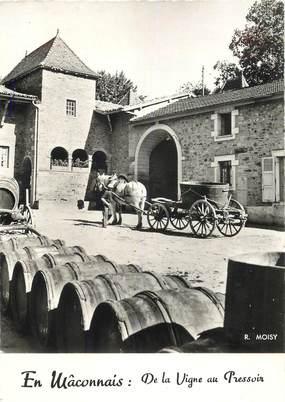"""CPSM FRANCE 71 """"En Mâconnais, de la vigne au pressoir"""" / VENDANGE"""
