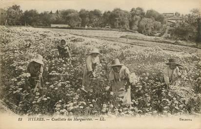 """CPA FRANCE 83 """"Hyères, cueillette des marguerites """""""