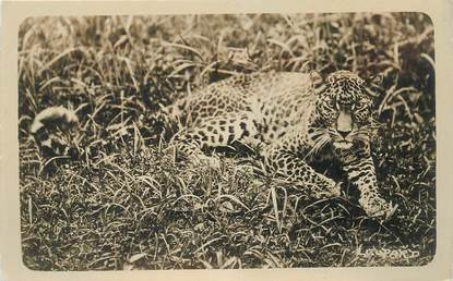 CARTE PHOTO LEOPARD