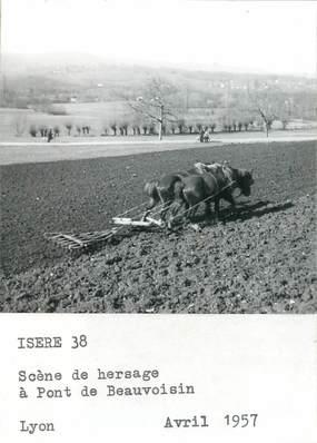 "PHOTO FRANCE 38 ""Beauvoisin, scène de hersage"" / AGRICULTURE"