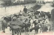 """31 Haute Garonne CPA FRANCE 31 """"Troupeau de chèvres et le chevrier"""""""