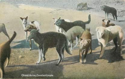 """CPA TURQUIE """"Constantinople, chiens de rue"""""""