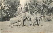 "Asie CPA INDE / CEYLAN ""Colombo, Éléphants"""