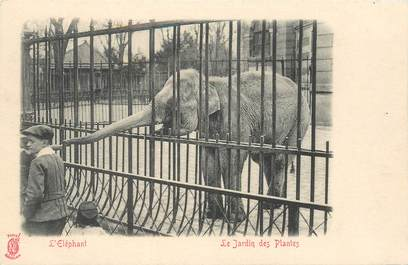 """CPA FRANCE 75 """"Paris, Le Jardin des Plantes"""""""