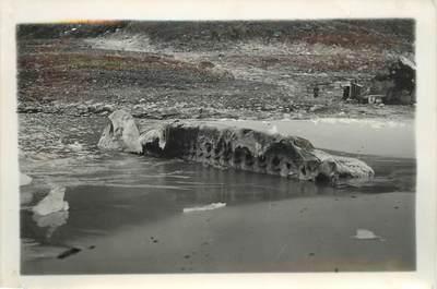 """CARTE PHOTO / PHOTOGRAPHIE ORIGINALE EXPEDITION POLAIRE """"Cadavre de baleine"""""""