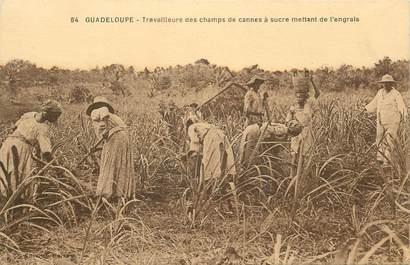 """CPA GUADELOUPE """"Travailleurs des champs de cannes à sucre mettant de l'engrais"""""""