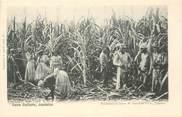 """Antille CPA JAMAIQUE """"Coupe de la Canne à sucre"""""""