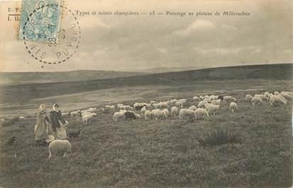 """CPA FRANCE 19 """"Pâturages au plateau de Millevaches"""""""