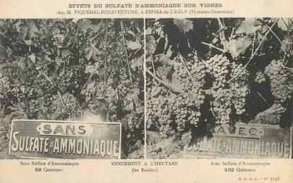 """/ CPA FRANCE 66 """"Espira de l'Agly, effets du sulfate d'ammoniaque sur Vignes"""""""