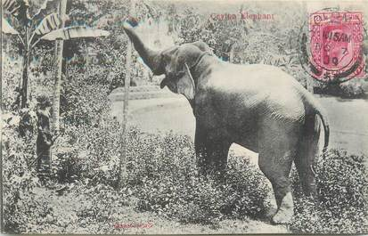 CPA SRI LANKA / CEYLAN / ELEPHANT