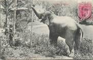 Asie CPA SRI LANKA / CEYLAN / ELEPHANT