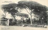 """47 Lot Et Garonne / CPA FRANCE 47 """"Ambrus, un coin pittoresque de la forêt"""""""