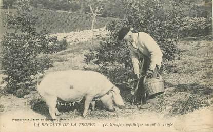 """CPA FRANCE 19 """"La Récolte de la Truffe"""" / COCHON"""