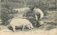 """19 Correze CPA FRANCE 19 """"La Récolte de la Truffe"""" / COCHON"""