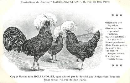 """/ CPA COQ / POULE """"Journal l'acclimatation, race Hollandaise"""""""