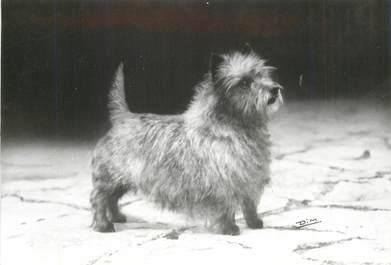 """CPSM  CHIEN """"Cairn terrier"""" / OBLITÉRATION CACHET PORT PAYE  / PUBLICITÉ"""