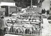 """18 Cher / CPSM FRANCE 18 """"Sancoins, marché aux moutons"""""""